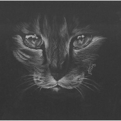 inverzní kresba kočka