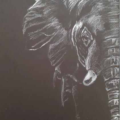 inverzní kresba slon