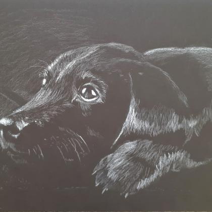 inverzní kresba pes