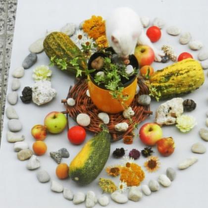 Mandala z jídla