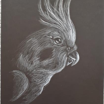 inverzní kresba papoušek